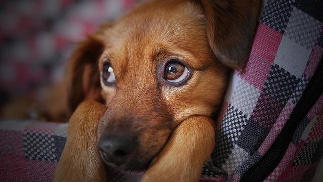 Varför råder anomi på svenska hundkurser