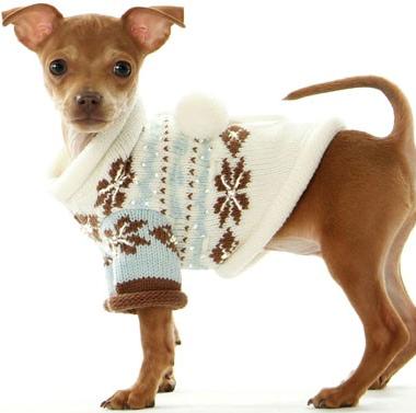 Hundkläder – klädd hund