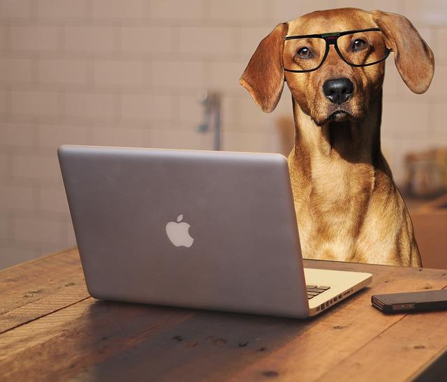 SVT stjälper god hundhållning