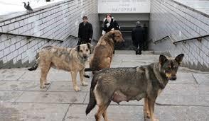 Gatans hundar i Sverige?