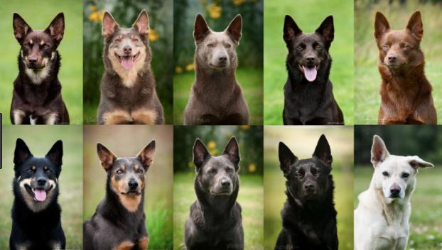 Hundproblem – problem för hunden!