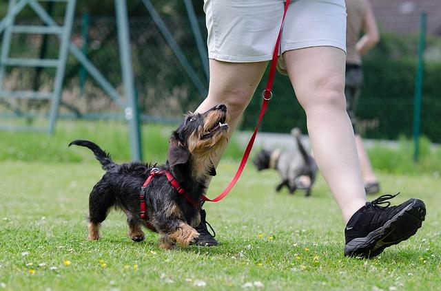 Lycka – en lydig hund?
