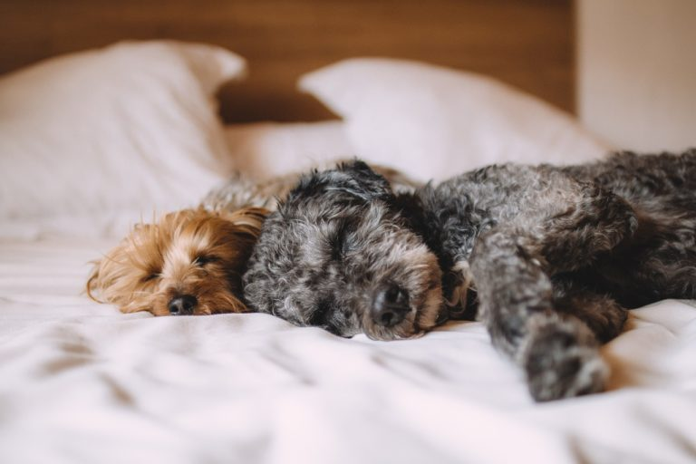 Uppmärksamhet behövs för inlärning, liksom sömn…
