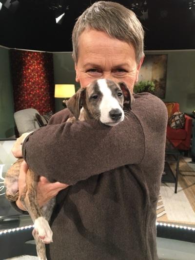 Hundproblem/Problemhund
