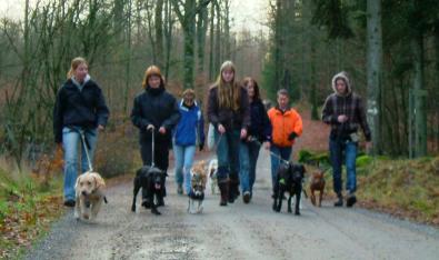 Läs mer om artikeln Hundar gillar hundar…