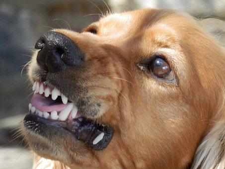 Oro, Bitande/nafsande Hund