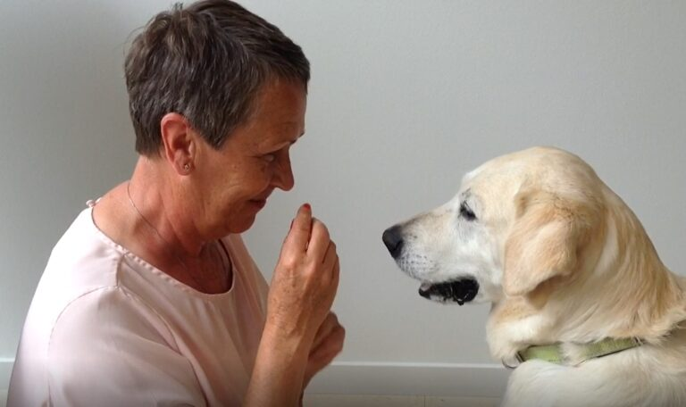 Hundarnas Favoritlåt – Raise the woof – spela upp den för din hund!